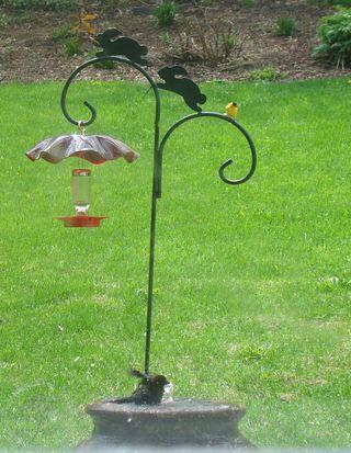 Cowbirdandgoldfinch