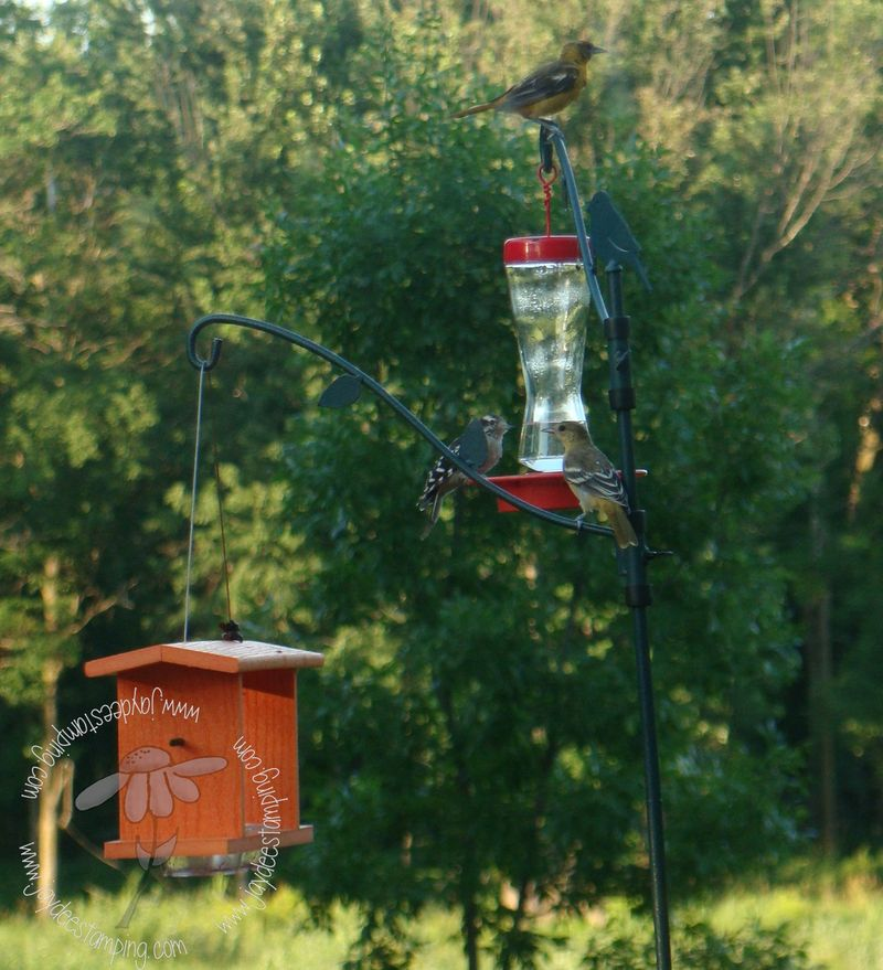 Competition at the feeder
