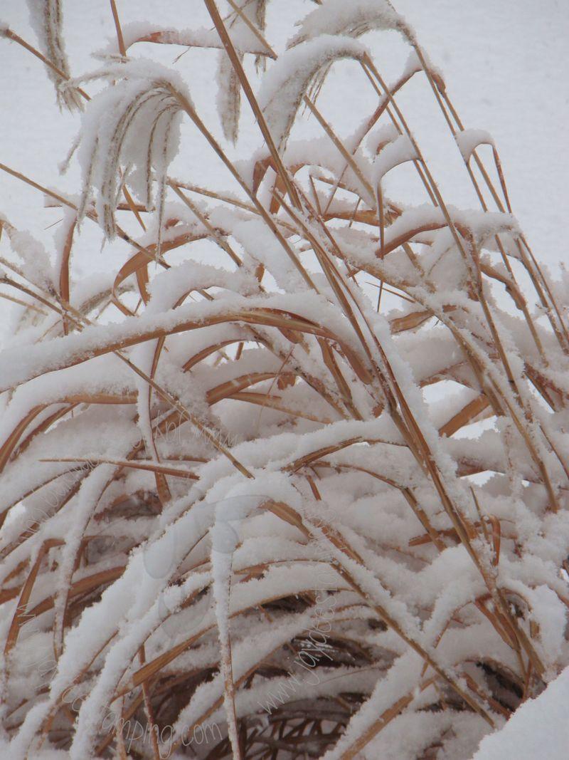 Snowy3 (1)