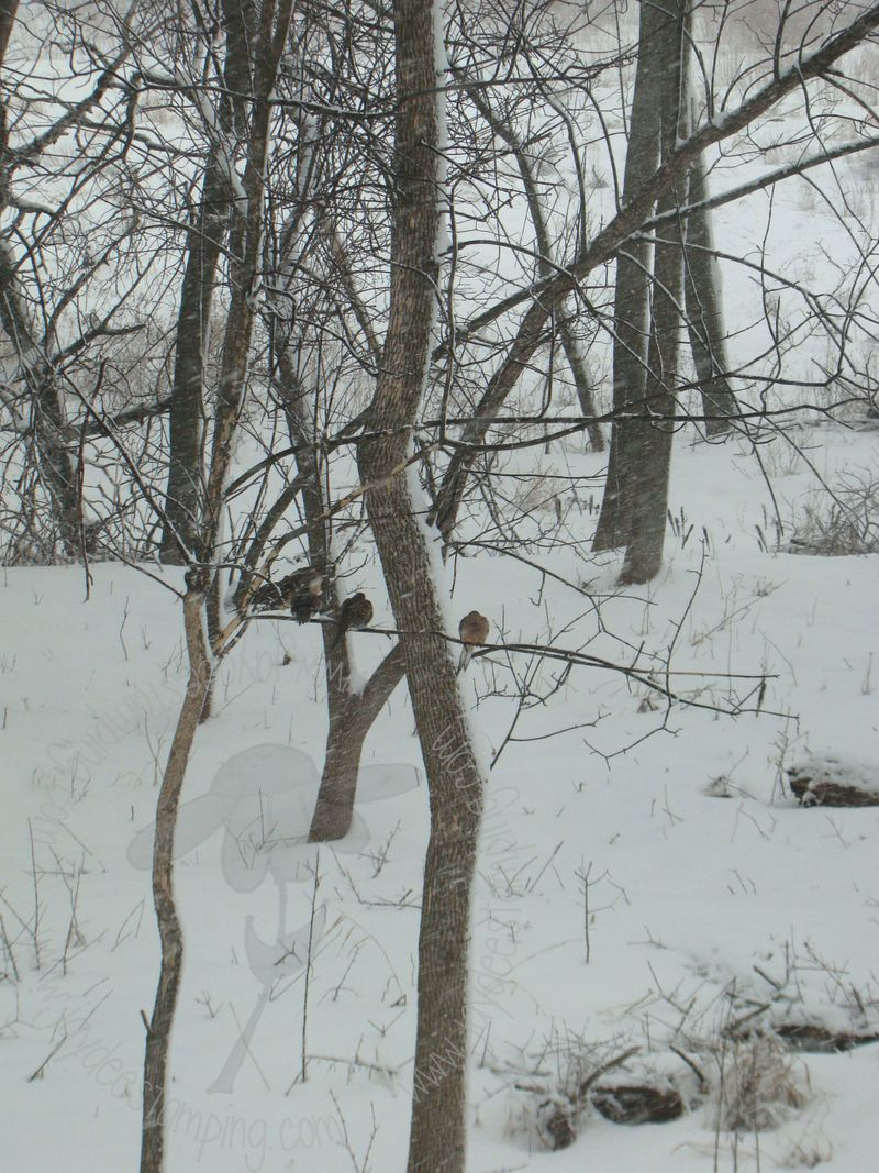 Snowy4 (1)