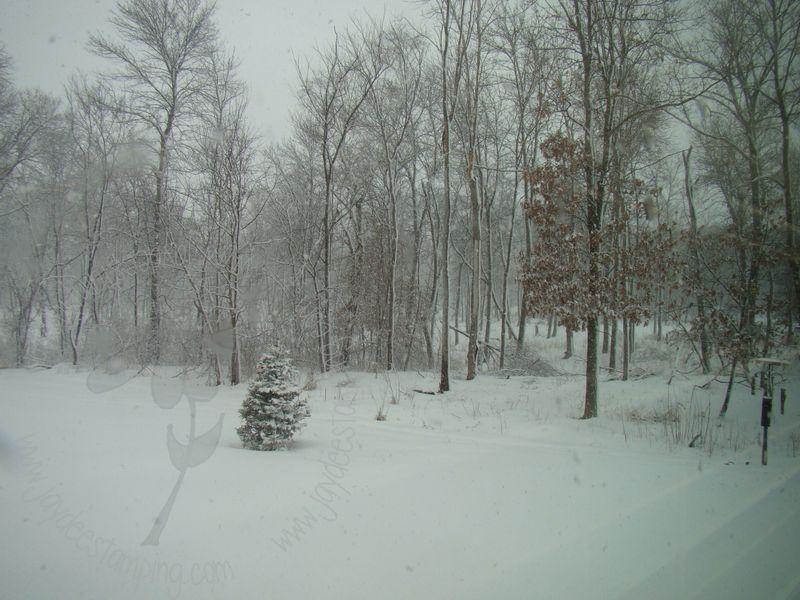 Snowy1 (1)