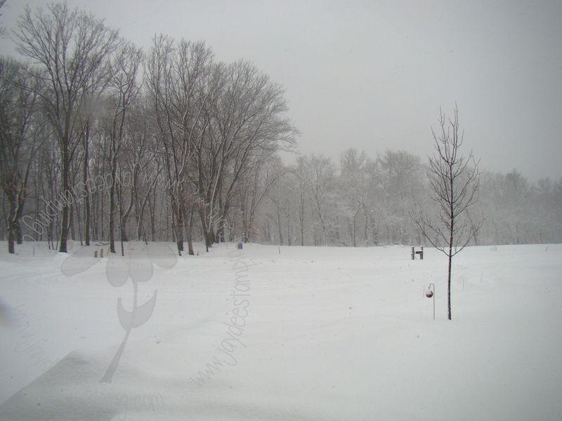 Snowy2 (1)