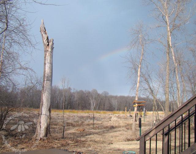 Rainbowwetland (1 of 1)