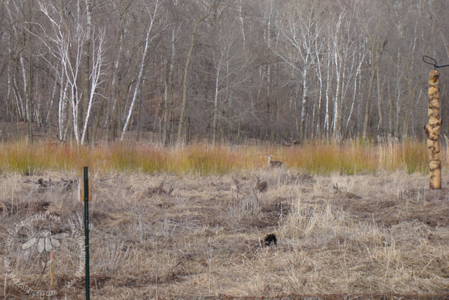 Deerwetland (1 of 1)