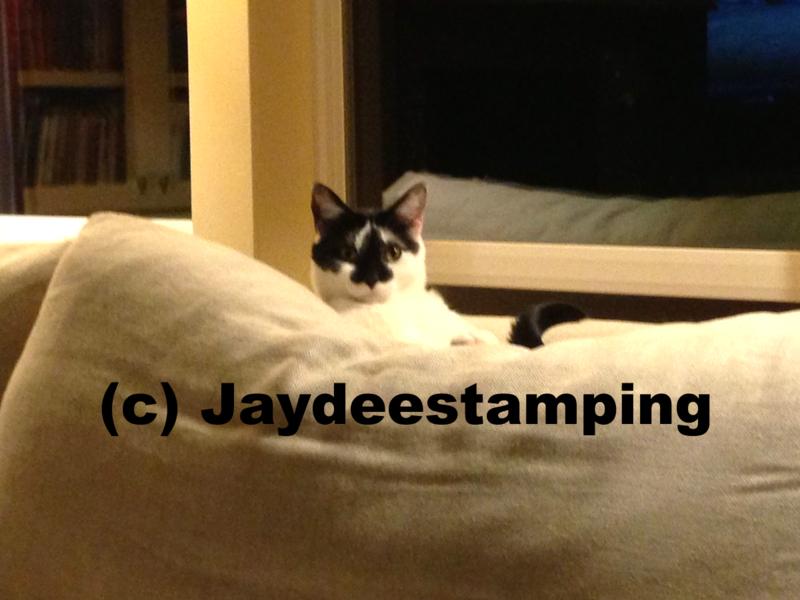 Charlietcat