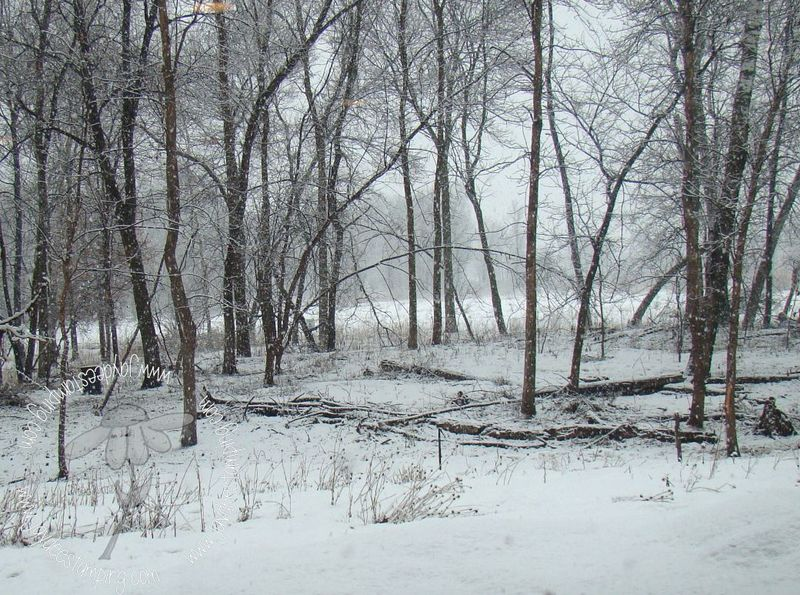 Snowfall (2)