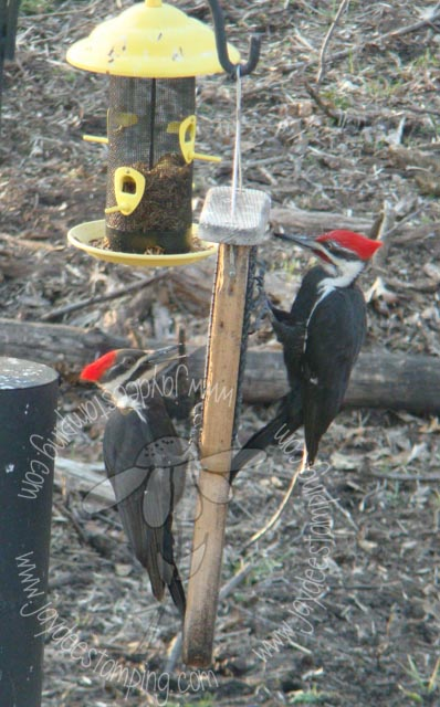 Mirroredpileated