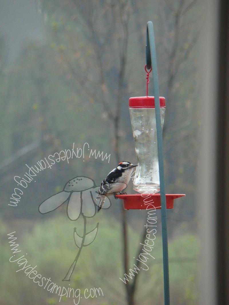 Sugarpecker