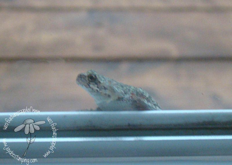 Treefrog (1 of 1)