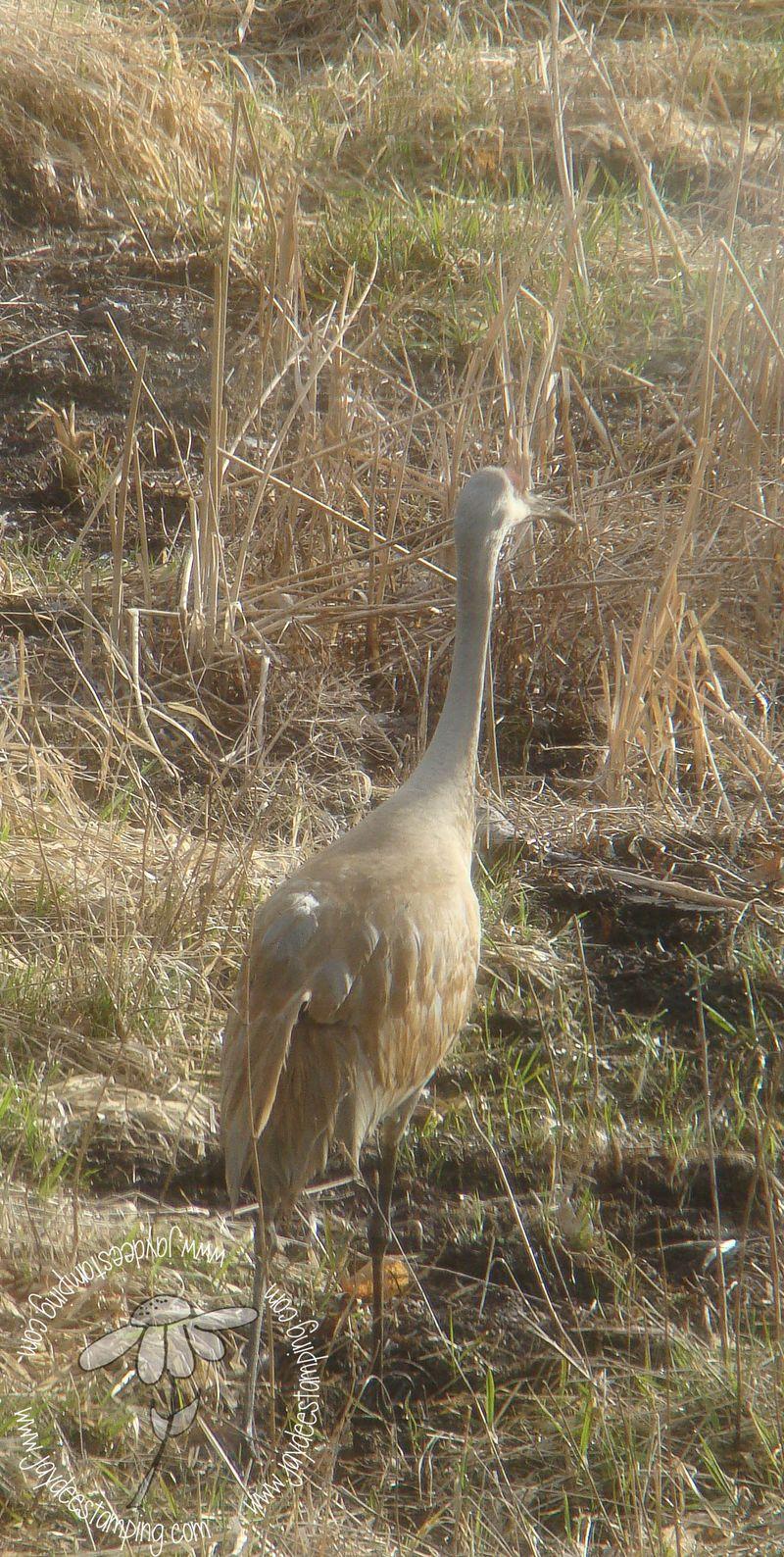 Crane (1 of 1)