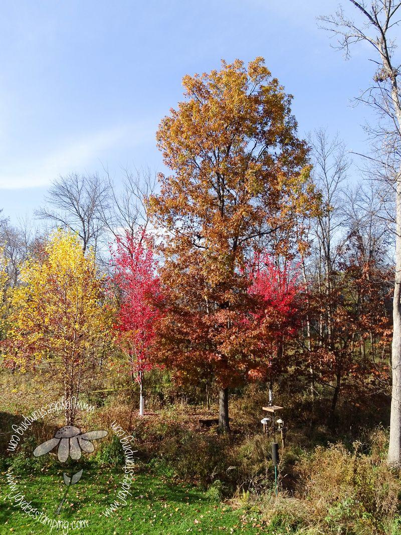 Fallcolors (1 of 1)