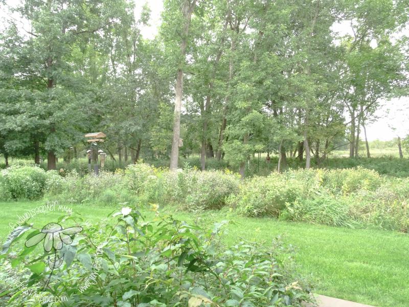 Woodland (1 of 1)-2
