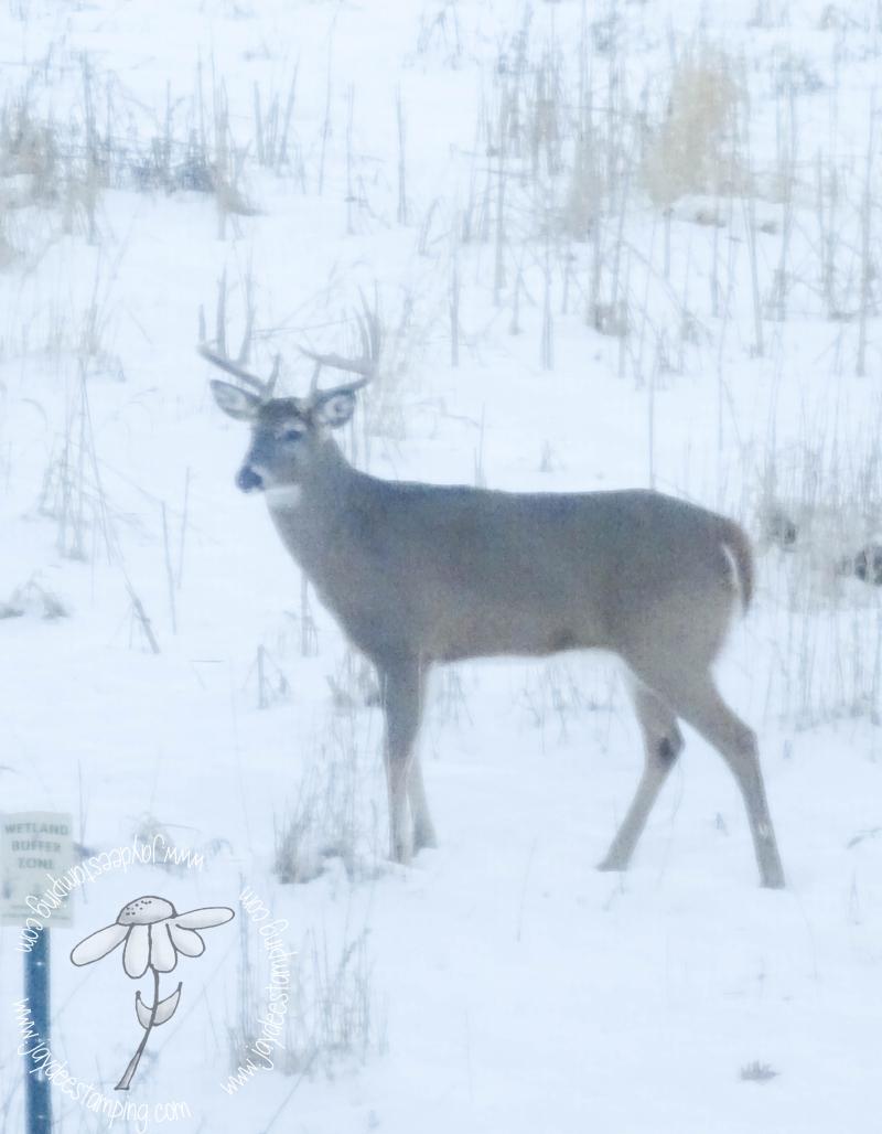 Buck (1 of 1)-2