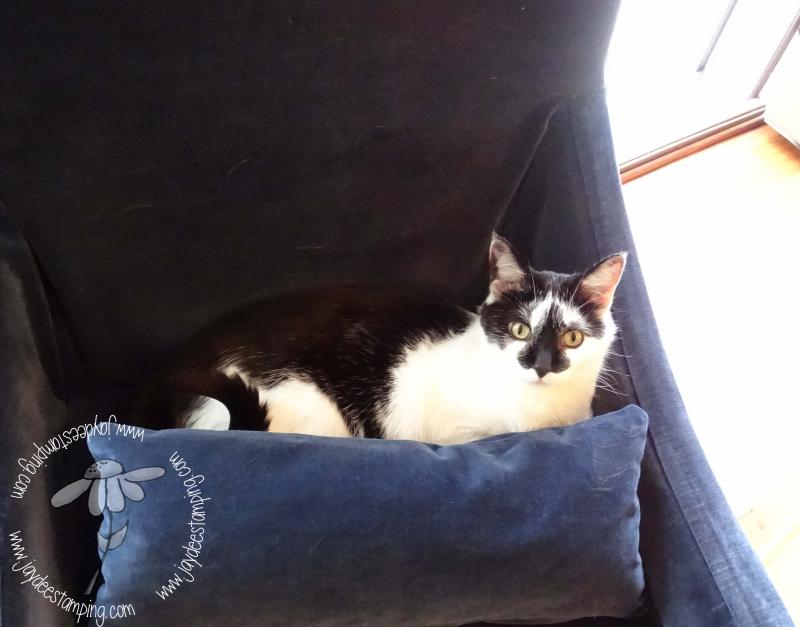 Charliecat (1 of 1)