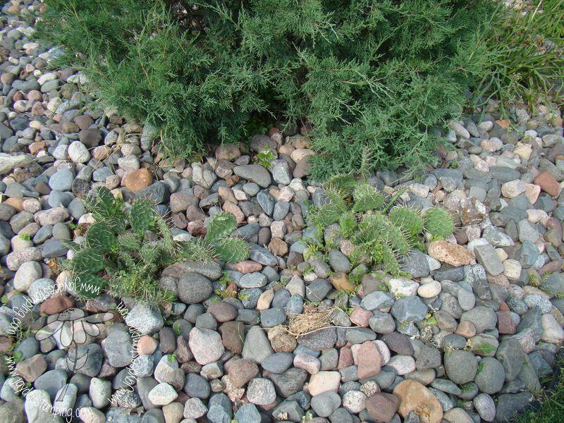 Cacti (1 of 1)