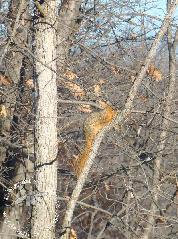 Groundsquirrel (1 of 1)