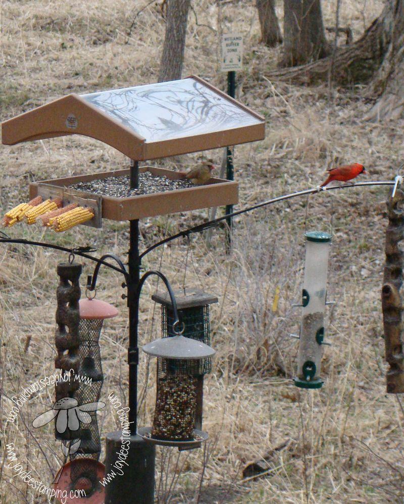 Cardinals (1 of 1)