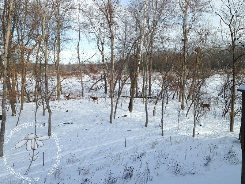 Woodland (1 of 1)