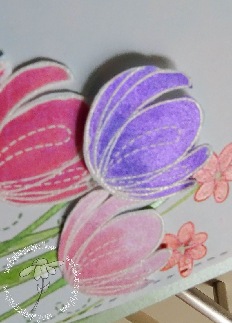 Spring flowers closeup (1 of 1)