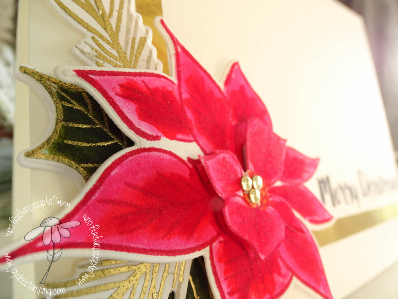 Poinsettia layered close up (1 of 1)