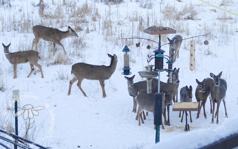 Deer (1 of 1)-2