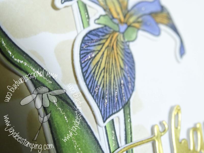 Enchanted iris (1 of 1)-2