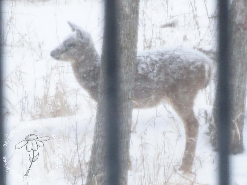 Snowcovered deer (1 of 1)