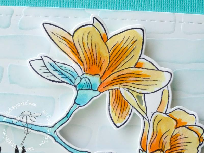 Magnolia closeup (1 of 1)