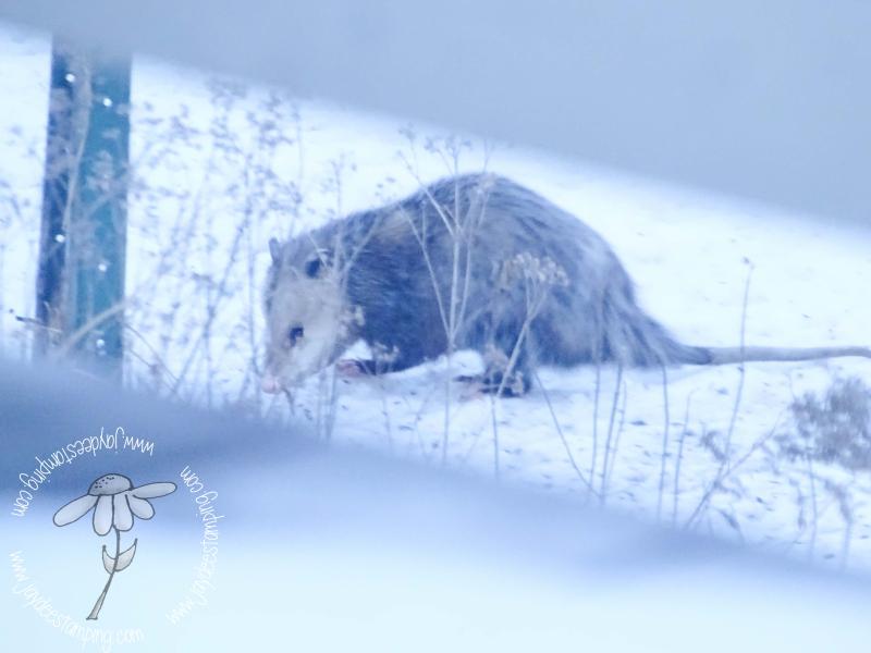 Possum (1 of 1)-2