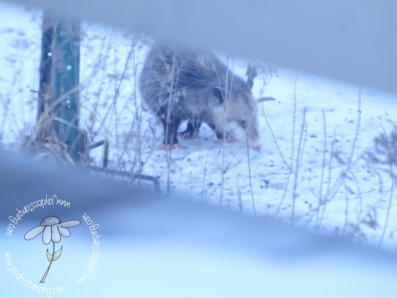 Possum2 (1 of 1)
