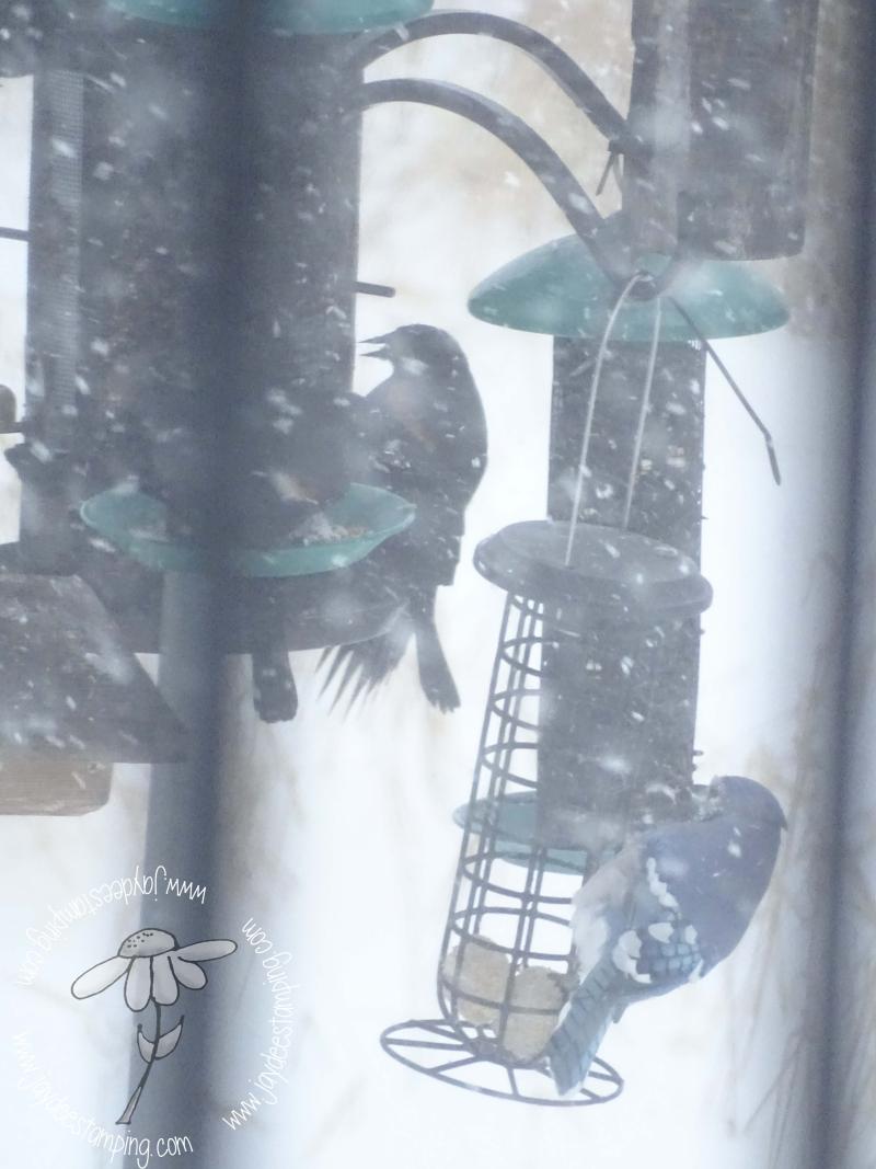 Snowstorm feeding (1 of 1)