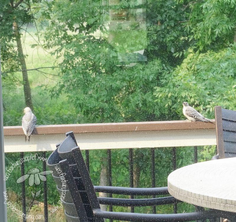 Woodpecker babies (1 of 1)