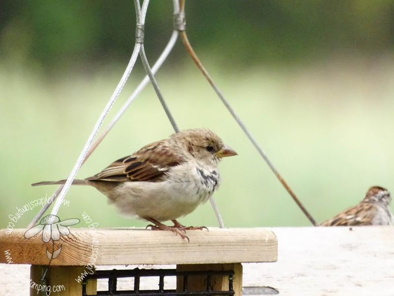 Sparrow (1 of 1)