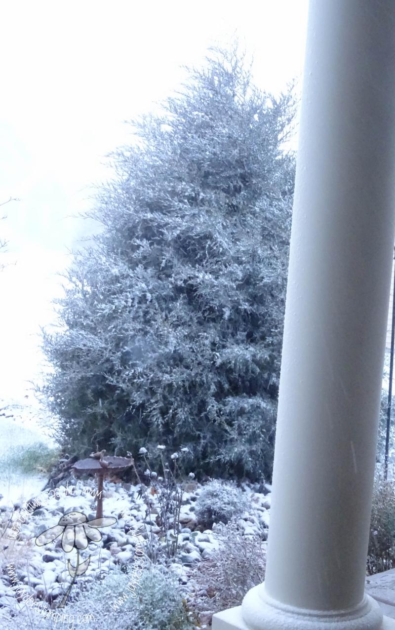 Snow (1 of 1)-2