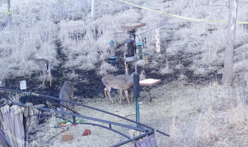 Deer (1 of 1)-3
