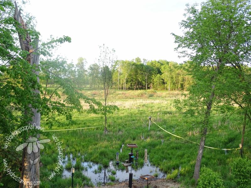 Wetlandsun (1 of 1)