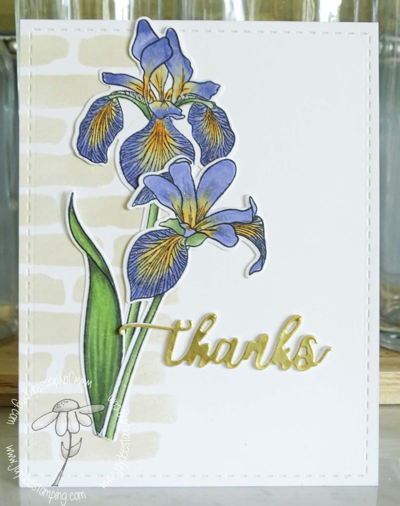 Enchanted iris full (1 of 1)