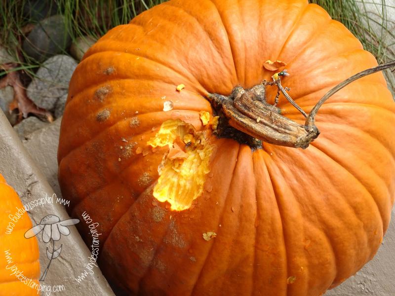 Pumpkin (1 of 1)