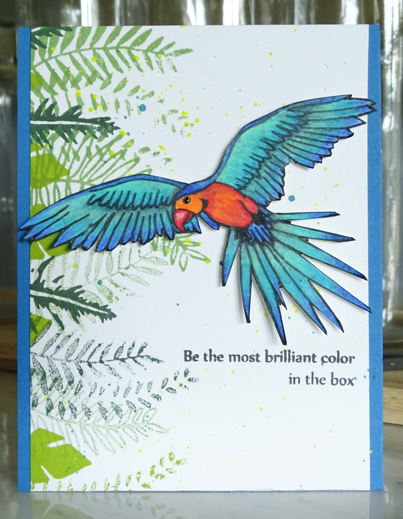 Parrot2 (1 of 1)