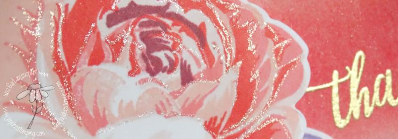 Muse rose closeup (1 of 1)-2