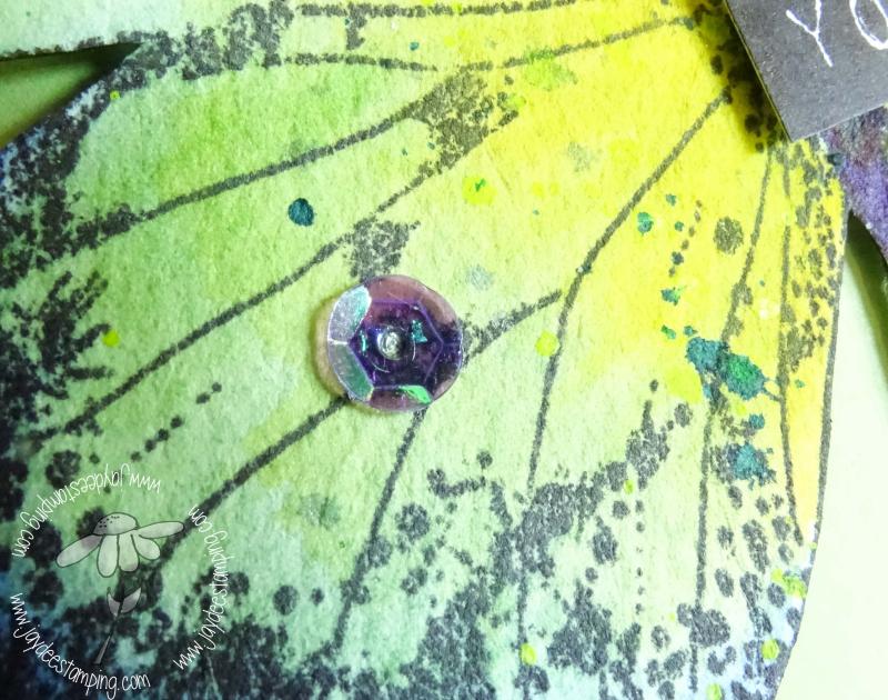 Indigo Blue Butterfly closeup (1 of 1)