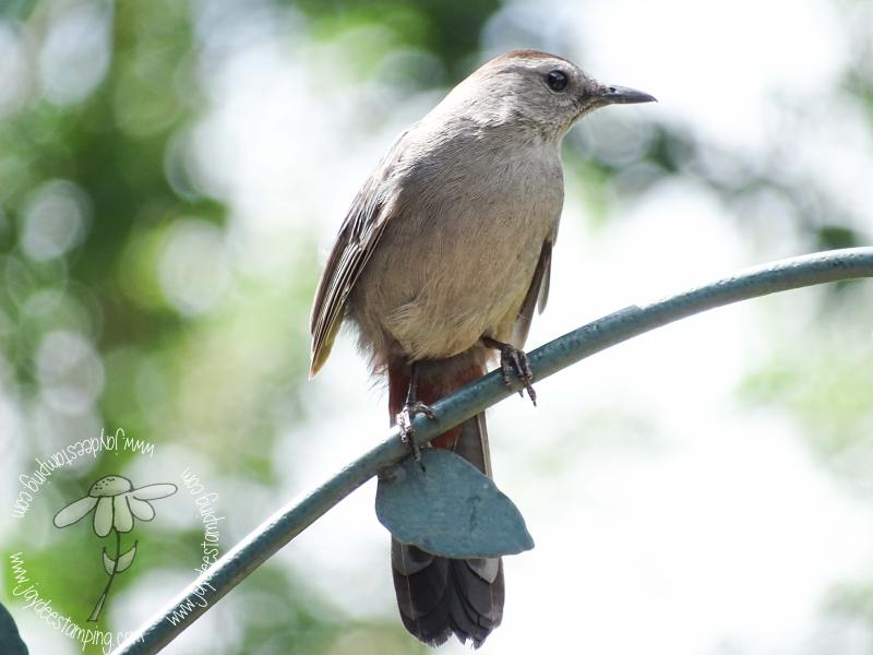 Catbird (1 of 1)-4