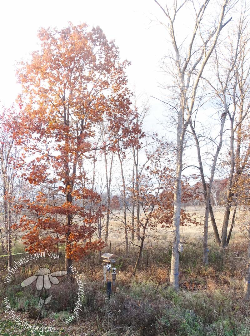 Oak tree (1 of 1)