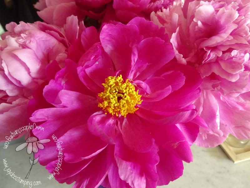 Pink Peonies (1 of 1)