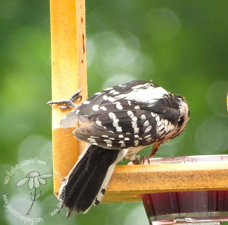 Sugarpecker (1 of 1)