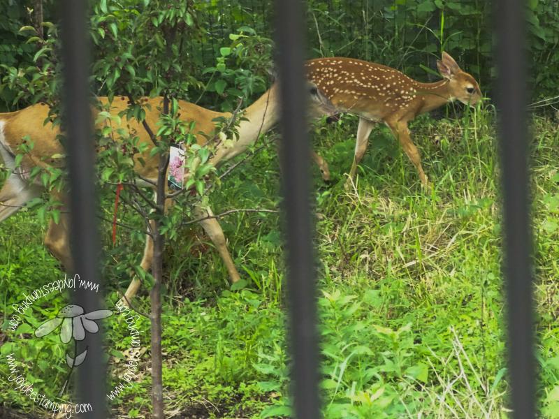 Deer (1 of 1)