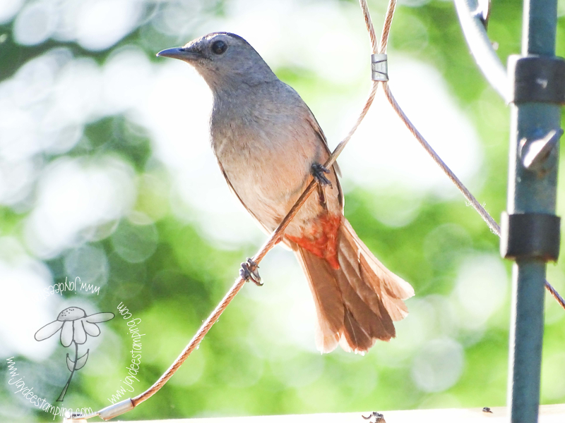 Catbird (1 of 1)-2