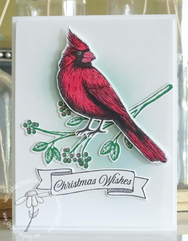 Cardinal Christmas (1 of 1)