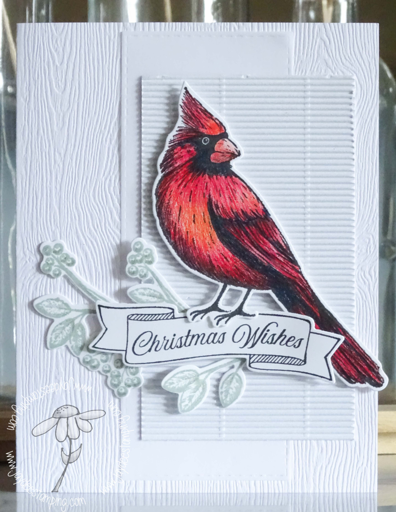 Christmas Cardinal for FMS (1 of 1)