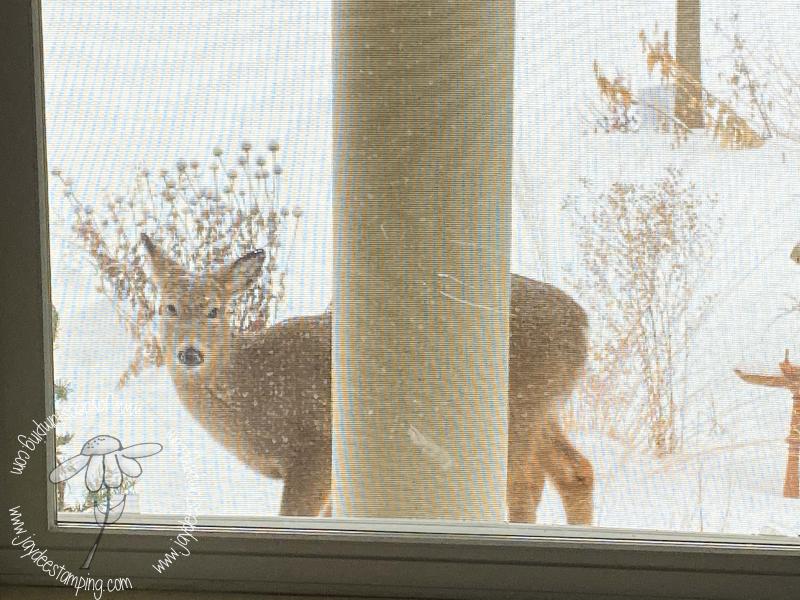 Deer (1 of 1)-6